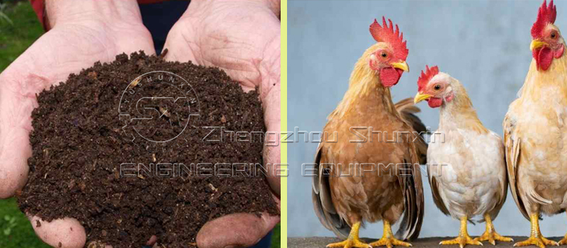 Chicken Manure for Quality Organic Liquid Fertilizer Production